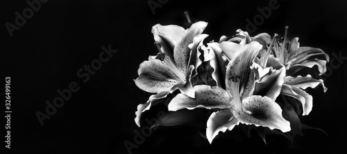 Carta da parati Condolence card with lily flowers isolated on black background