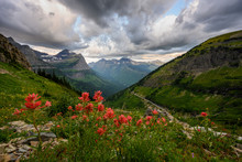 Indian Paintbrush Over Glacier...
