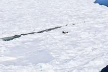 1 Año En La Antartida