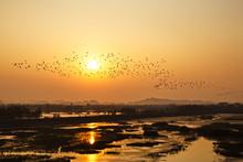 Egret Flocks In Van Long Natur...
