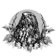 Hawk Head Composition In A Cir...