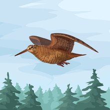 Realistic Wooscock Isolated In Forest Sandpiper Flying Forest Bird Vector Animal