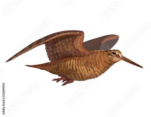 Obraz na plátne Realistic wooscock isolated on white sandpiper flying forest bird vector animal