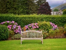 Garden Bench And Rhododendrons