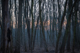 spring forest against the evening sky