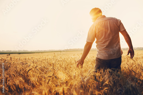 Fototapeta Silhouette of Man agronomist farmer in golden wheat field. Male holds ears of wheat in hand. obraz