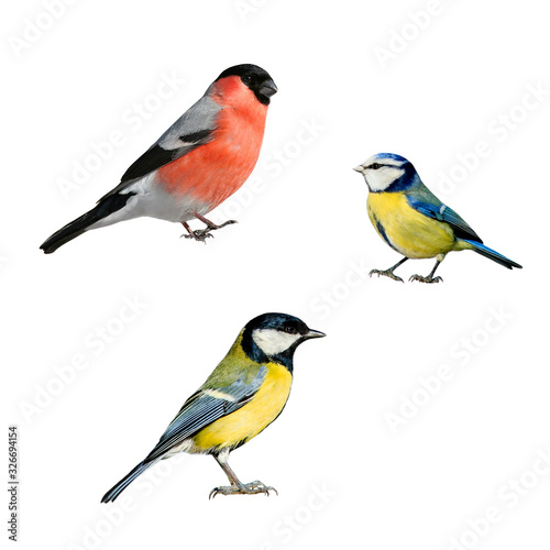 Canvas-taulu portrait of three European birds tit and bullfinch on a white isolated backgroun