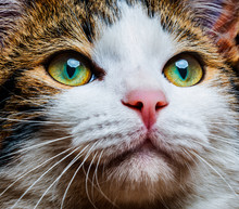 A Cat Eyes Close Up
