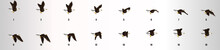 Eagle Flying Animation Sequenc...