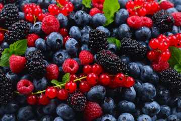 Blackberry, raspberry, blueberry,  red currant and mint background.