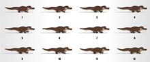 Crocodile Walk Cycle Animation...