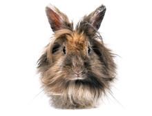 Portrait Of Cute Little Rabbit On White