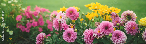 Photo Beautiful flower garden with blooming asters and different flowers in sunlight,