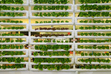 Hydroponics Vertical Farm In B...