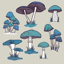 Vector Set Of Bright Hand Drawn Mushrooms