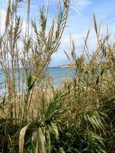 Coral Bay Auf Zypern