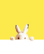 White Easter Rabbit With Sheet...