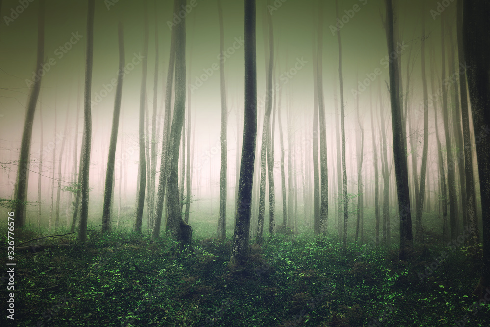 Mystic foggy light in green dark forest fairytale landscape.