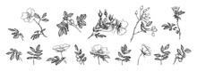 Flowers, Leaves And Rose Hips Collection. Engraved  Flowers Sketch Vintage Set. Botanical Illustration, Black Outline Isolated On A White Background