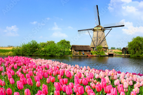 Fototapeta Traditional Dutch windmill along a canal with pink tulip flowers in the foreground, Netherlands obraz