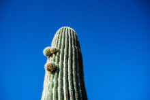 Cactus On Background Of Blue Sky