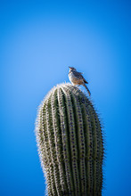 Bird On Cactus With Blue Sky