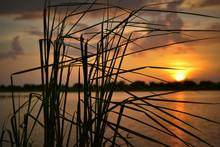 Bent Grass Sunset