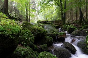 Grünes Silberbachtal