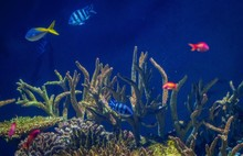 Blue Fish With Plants In An Aquarium