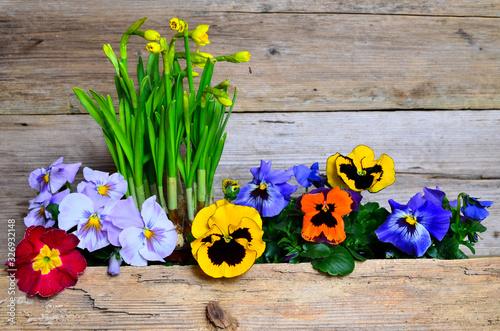 Frühlingsblumen auf Holzhintergrund Ostern Osterglocken Holz Wallpaper Mural