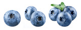 Blueberry isolated. Blueberry on white. Bilberry. Bilberry on white background.