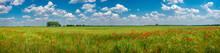 Panoramic View Over Grassland ...