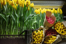 Growing Tulips In A Greenhouse...