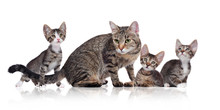 Mother Cat Tabby Colored With ...