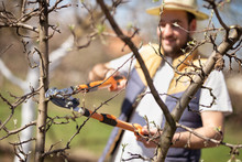 Young Farmer Pruning Trees