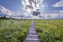 Wooden Tourist Walkway Called Dluga Luka On A Lawki Swamps In Biebrza National Park, Podlasie Region Of Poland