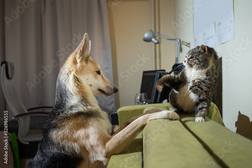 Photo Playful dog acquainting with old cat at home