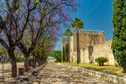 The majestic walls of the Moorish Alcazar and the lacy shadow of lushly flowering jacaranda trees in Puerto Street in Jerez de la Frontera, Andalusia, Spain