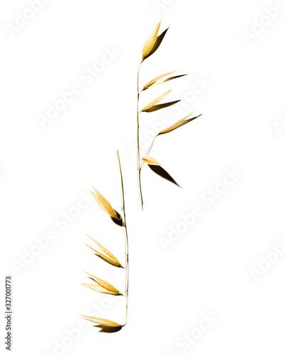 Fototapeta Foglie isolate su fondo bianco