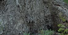 The Texture Of The Tree Bark I...