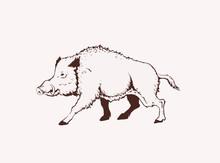Graphical Illustration Of Wild Hog, Vector  Sepia Illustration