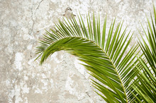Palm Frond Curving In Tropical...