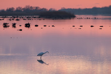 Bird During Sunset