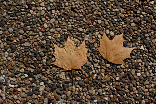 Abstract art texture background of dry maple leaves on a conglomerate stone pebb Fototapeta
