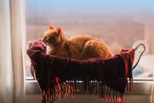 Gato Atigrado Acostado En Una ...