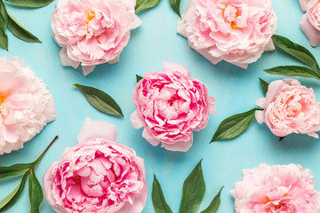 Creative layout made with pink peony flowers on blue background. Flat lay. Flower composition