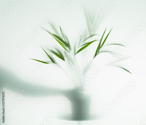 Fototapeta palm in fog obraz na płótnie
