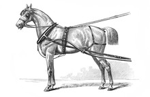 Harnessed Horse Engraved In The Old Book Meyers Lexicon, Vol. 7, 1897, Leipzig