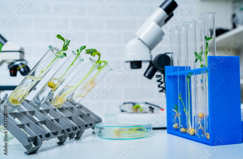Photo Genetically modified plant tested