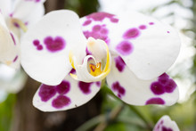 Orchid Flower On A Botanical G...